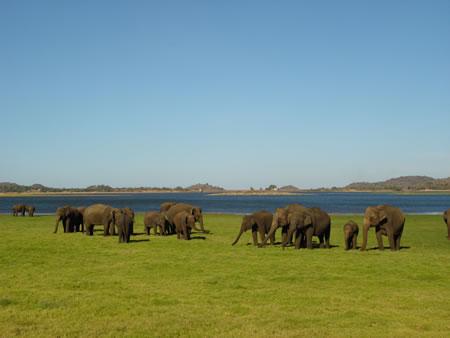 šrilanka park