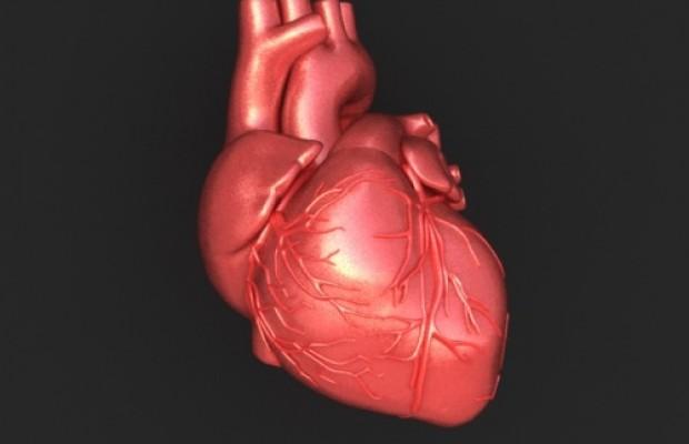 Srce, pomembne spremembe